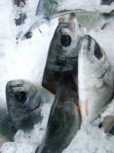 Tuna and Aquaculture | IFIS Publishing