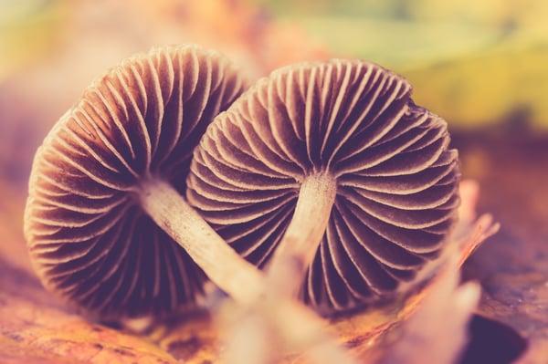 Mushrooms | IFIS Publishing