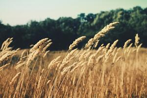 Agriculture and Grains | IFIS Publishing