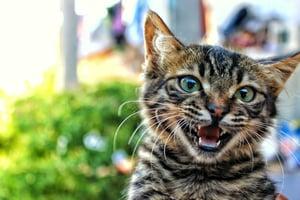 Cat Food | IFIS Publishing