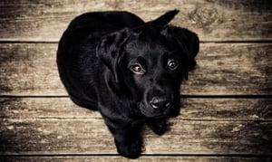 Dog Food | IFIS Publishing