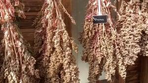 Quinoa | IFIS Publishing