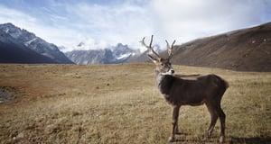 Deer | IFIS Publishing
