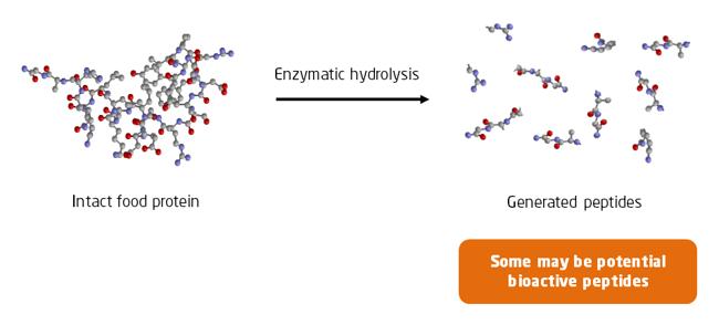 Enzymatic hydrolysis of food proteins   Fidel Toldra   IFIS Publishing