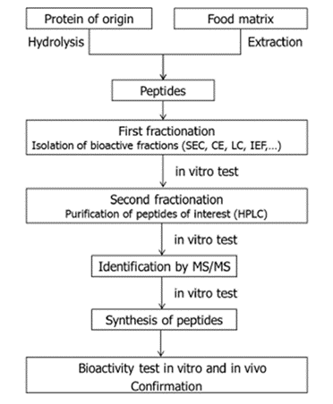 Bioactive peptides in food matrices