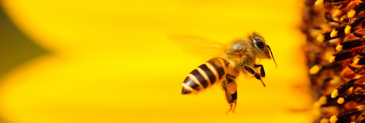 Bees and almond farming | IFIS Publishing