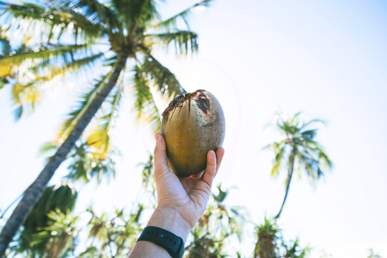 Debunking coconut oil claims | IFIS Publishing