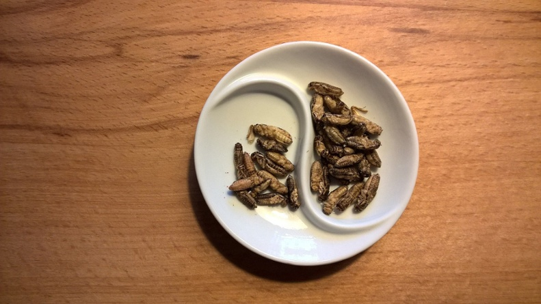 Edible Insects | IFIS Publishing