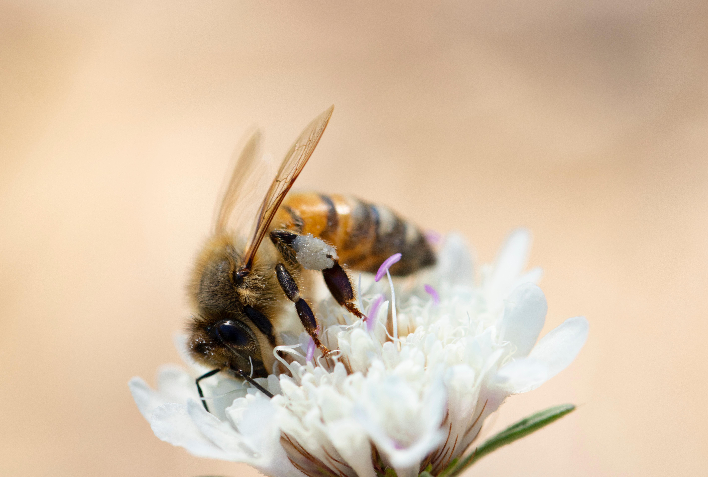 Honeybee | IFIS Publishing